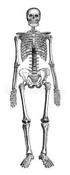 Juegos De Ciencias Juego De Sistema óseo Huesos Principales Cerebriti