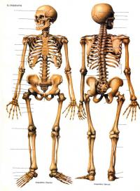 Juegos De Ciencias Juego De Huesos Del Cuerpo Humano 5 Cerebriti